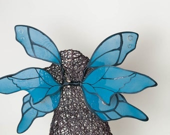 Medium blue and black wings