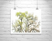 Fine Art Photography, Tree Art, Nature Photography, Cottonwood, Empire Ranch, Tree Picture, Elegant Art, Spring Art, Wall Picture, Wall Art