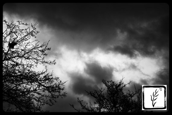 B&W Photograph, fine art, photo print, wall art, home decor, stormy sky, tornado clouds, nature, storm, trees, haiku, poem, Indiana