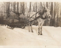 Original Vintage Photograph Harnessed Horse Loaded Sleigh Snow 1910s
