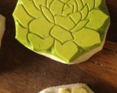 two succulent stamps
