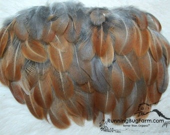 Real Feathers Natural Feathers Cruelty Free Feathers Loose Feathers Real Bird Feathers Craft Feathers Blue Hen Feathers For Crafts / BA8
