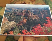 Grand Canyon Postcard Vintage Souvenir Photos Travel USA North Rim Arizona Red Flowers Desert Mountains