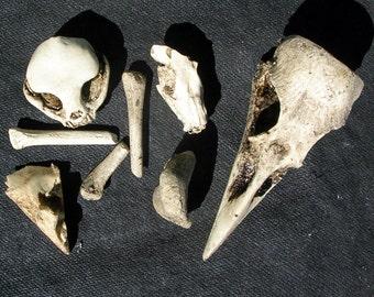 Boner Bag 1 replica skull bone assortment bork bones miscast irregular
