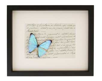 Antique Wall Art French Paper Blue Morpho Display