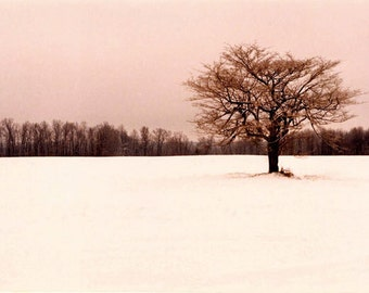 Tree Photography Print Poster, Winter Landscape, Home Decor, Lone Tree Art Print, Wall art, fine art prints