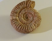 Ammonite Specimen, Home Decoration, Feng Shui, Vintage