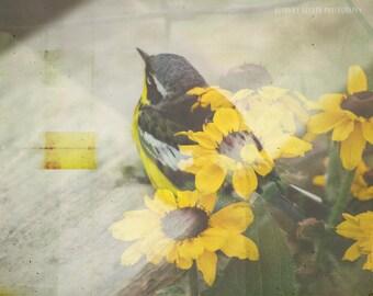 Bird Photography, Nature Photography, Double Exposure, Bird Print, Yellow Art, Wildlife Photography, Yellow Flowers, Dreamy Photography,Bird
