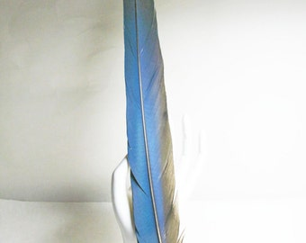 """18"""" Natural Parrot Feathers, Blue and Gold Macaw, Bright Cobalt Blue"""