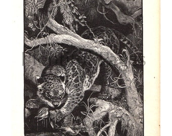 "1888 Vintage Illustration from Belford's Annual Images, ""A Jaguar Catching Fish"", Antique Book Page, B&W Illustration, Great for Framing."