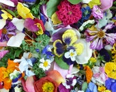 Flower Confetti, Real Flowers, Autumn,  Wedding Confetti, Flower Petals, Dried Flowers, Petal Confetti, Wedding Decor, Sample 1/4 US cup