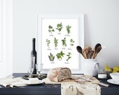Culinary Herbs Collection white. 8.5x11 letter size. Kitchen herbs. Gifts for the host. Green illustration. Kitchen decor. Watercolor herbs