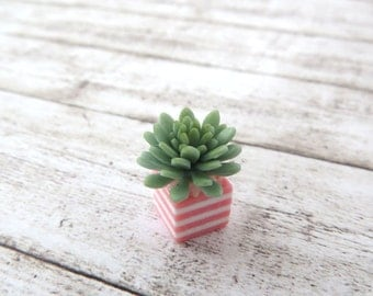 Aqua green Echeveria in striped vase for dollhouse in 1:12 scale