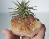 Air Planter on Citrine Druzy Geode Chunk, Golden Brown Crystal Garden, Gift for Her, Little Something, Boho Decor, November Birthstone