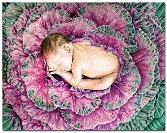 """It's A Boy! baby sleeping in ornamental cabbage colored pencils painting Sandrine Curtiss ORIGINAL Art 11x14"""""""