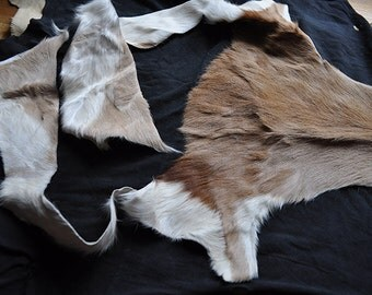 Rare Large Springbok Leather Fur Scrap