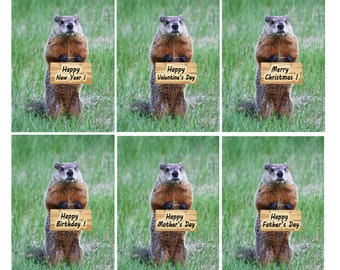 Groundhog greeting card Happy birthday Father's Day Mother's Day Merry Christmas Valentines Day Happy New Year (Choose 1; blank inside)