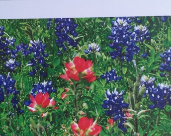 Bluebonnet Photo Print Greeting Card Blank Inside Birthday Card