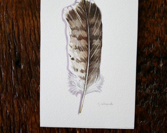 Hawk Feather - Original Watercolour painting