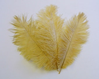 Champagne Ostrich Feathers