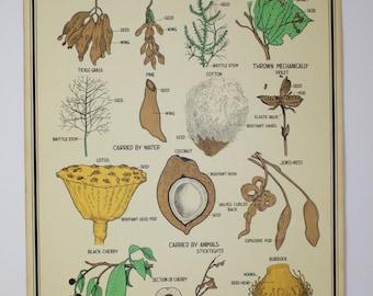 Vintage Biology Chart