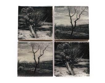 Tree Coaster Set (4 Stone Coasters, Black and White) Fine Art Nature Home Decor