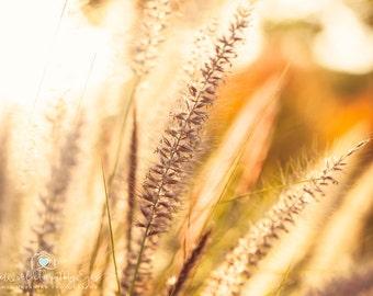 Sunset  Photography Nature Photography flower photography grass  Abstract Photography Surreal Fine Art Photography Print