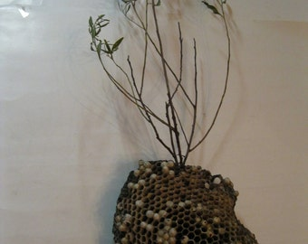 Natural Nature Made Amazing Creations Large Wasp Nest Harvested and Ready for Craft Art Teacher Science Projects Wreaths or Centerpieces