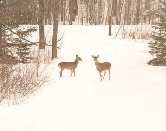 Wildlife Photography deer,wild animals,winter landscape,snow,snowy,two deer in the snow,fine art photography,neutral colors,wildlife decor