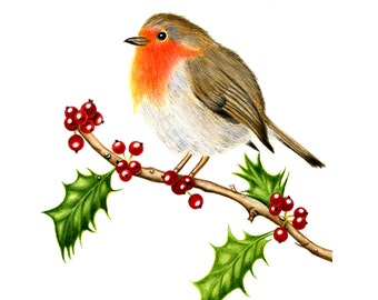 An English Robin on a Holly Branch