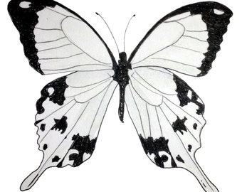 "Limited Edition Print 5"" x 7"" -  Black and White Swallowtail, Butterfly. insects."