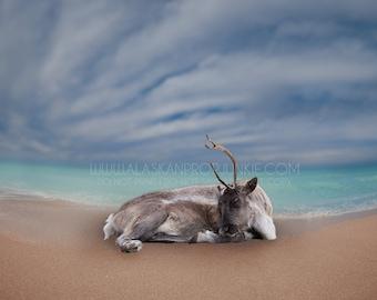 Sleepy Reindeer 1 Overlay - Christmas, Santa's Reindeer, North Pole, Overlay