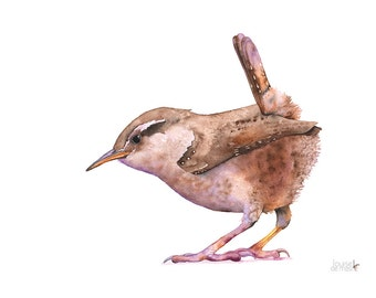 Wren print of watercolor painting, W12716, wren watercolor painting, wren painting, 5 by 7 size, Bird art wall print
