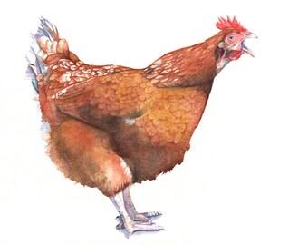Chicken Print of watercolour painting A4 size print - C7115 - Farmyard Fresh country decor wall art