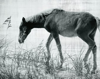Horse Photography | Black and White Horse Art Print | Horse Wall Decor | Wild Horse, OBX Beach | Horse Lover Gifts | Equine Decor Art Print