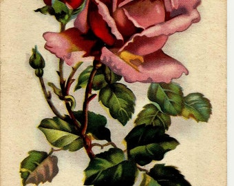 Rose Flower, Vintage Russian Postcard with Mark print 1962
