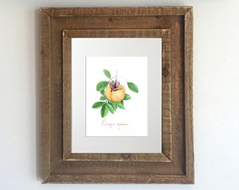 Botanical Print: Watercolor Persimmon - Kitchen Decor, Home Decor, Persimmon Painting, Fruit Painting, Kitchen Artwork, Gifts for Gardeners
