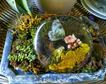 Brooch or pendant, real butterfly, real lichens and flowers of the Italian lands in transparent resin