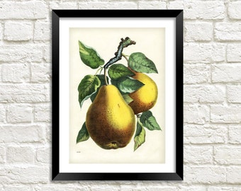 PEARS PRINT: Vintage Tree Fruit Art Illustration Wall Hanging (A4 / A3 Size)