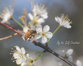 Honey Bee, Flowers, Chokeberry Blossoms, Nature Photography, Fine Art Photography, 8X10, Matted, Glossy