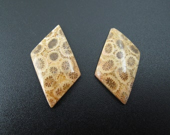 Beautiful Fossil coral  cabochon pair, earrings,set stone, Natural stone, , Jewelry making supplies S7216