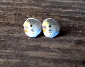 Budgie earrings, parakeet earrings, parrot earrings parakeet jewelry budgie art wearable art, budgie jewelry parrot jewelry