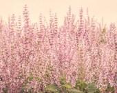 Flowers -  Nature, landscape, pink, girl, fine art, floral, art, garden, rustic, home decor, wall art, North Carolina