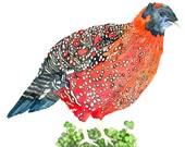 Tragopan Pheasant, Archival Print of Original Watercolor, you choose size