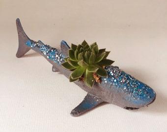 Succulent Shark, Whale Shark
