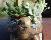 Galapago - Delightful Succulent Garden w/Echeveria, Luciae, Sedum, Graptoveria, Crassula, Plants in Vintage Turtle Planter