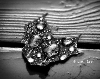 Black & White Photography Leaf After Storm Rain Drops 11 x 14