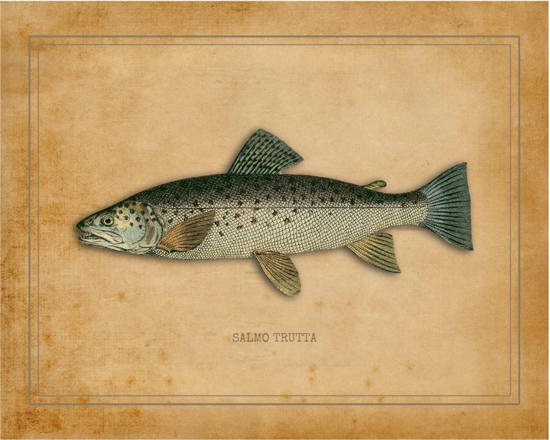 Fish print fishing fish poster fish decor fish art fish for Your inner fish sparknotes