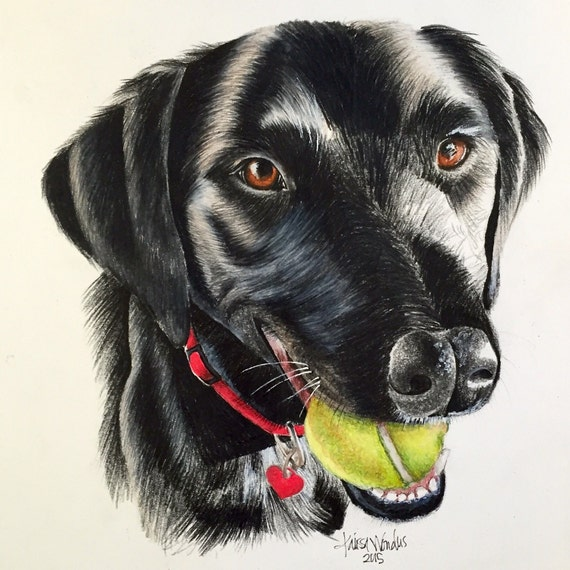 Custom Pet Portraits, Lab, Labrador, Colored Pencil, Drawing, Illustration, Custom Dog