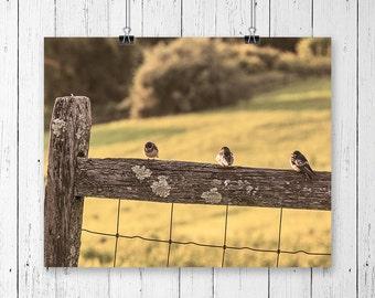 Bird Photography Farmhouse Decor Three Little Birds Rustic Home Decor Nature Photography Animal Print Nursery Bird Print Gallery Wall Prints